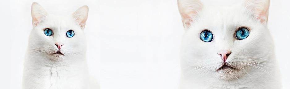 Tierarztpraxis Marc-Niklas Klingberg in Hamburg